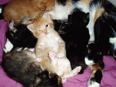 かわいい・かわいそうな猫TOP