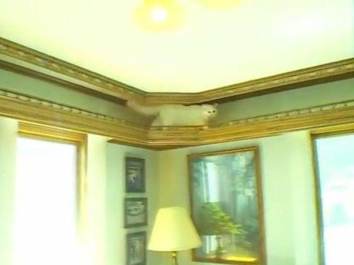 猫のために15年かけて家を大改造01