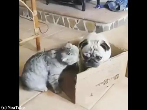 猫の言うことは絶対00