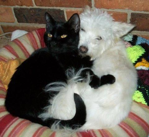 誰にも心を開かなかった犬が、猫と親友に01