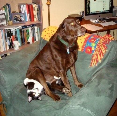 猫を屈服させる犬10