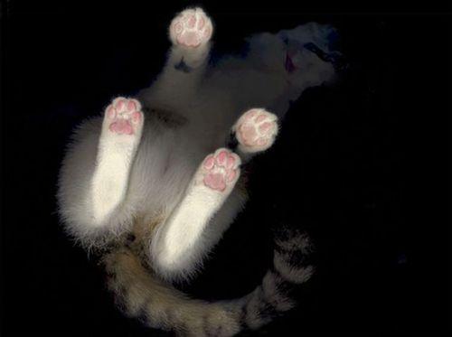 猫スキャン05