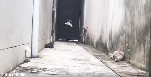 この猫の躍動感よ02