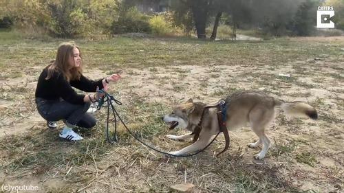 ペットオオカミとの楽しい日常風景05
