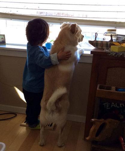犬を飼うべき理由24