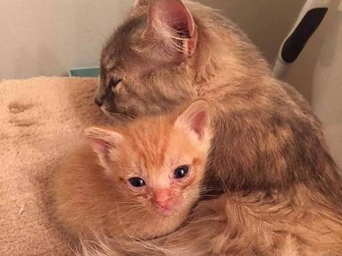 子を亡くした母猫と親を亡くした子猫03