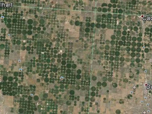 サウジアラビアの農場04