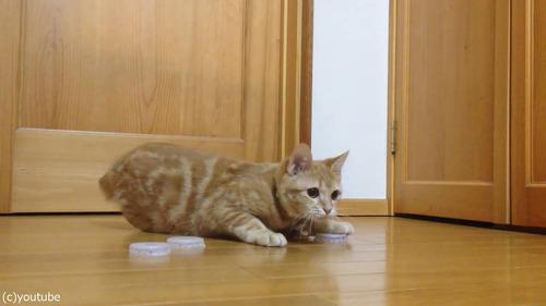 猫ゴールキーパー03