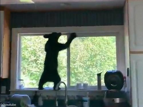 子クマ3匹が家の中に入り込んだ03