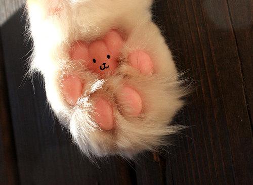 猫の肉球にテディベア01
