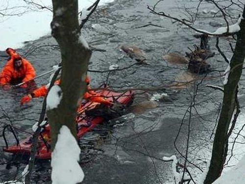 湖に落ちた鹿を救助00