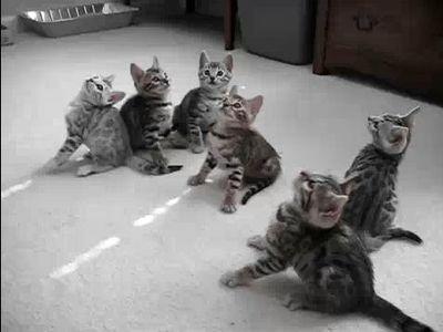 首くるくる子猫