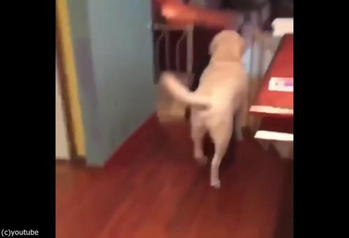 飼い主が出かけるのを嫌がる犬01