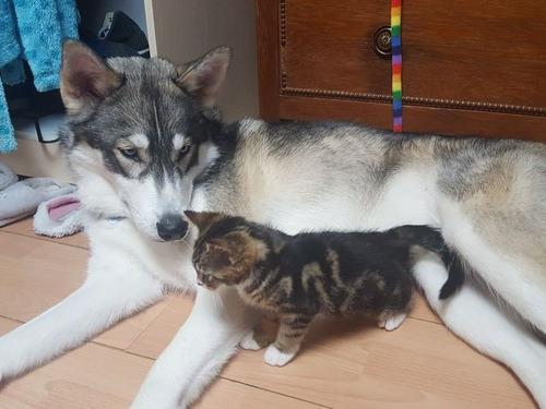 不安症の犬が子猫と出会った00