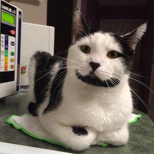 ハッピー猫07
