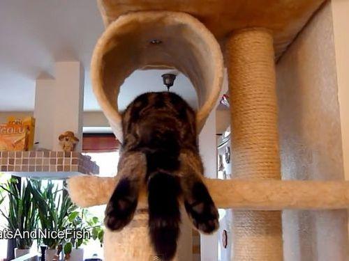 おかしな寝方の猫たち01