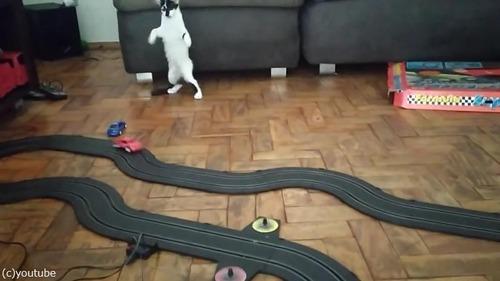 クルマのおもちゃにハイテンションになる猫02