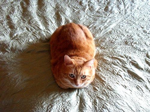 猫の「香箱座り」をパンの塊という理由05