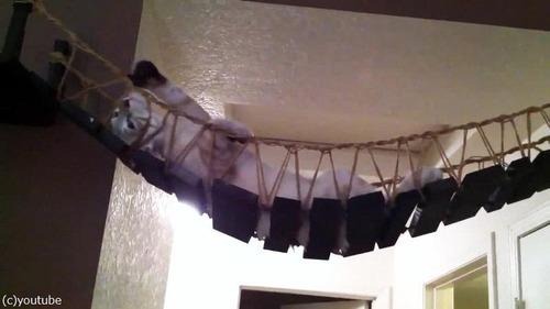 猫と吊り橋12