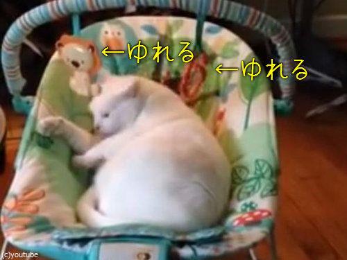 ベビーベッドに猫00