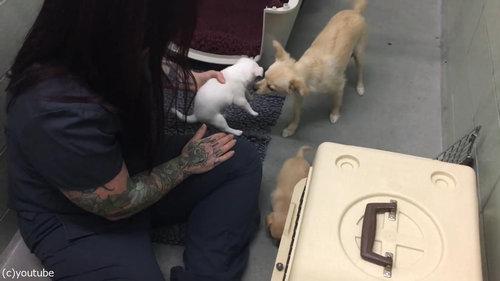 ママ犬が4匹の子犬と再会07