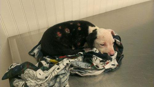 火災から救出された子犬、消防士に01