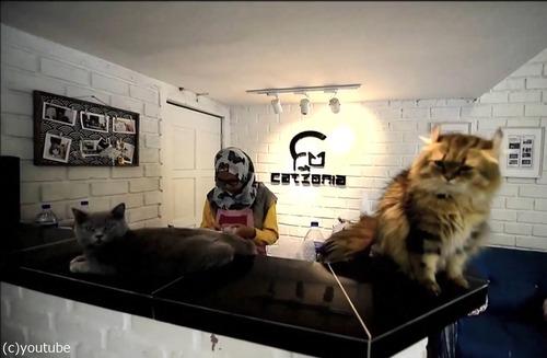 猫のための5つ星ホテル01