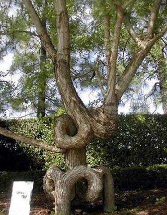 世界の奇妙な木14