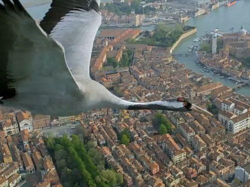 ベネチア上空の鳥