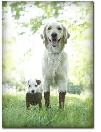 泥と犬01