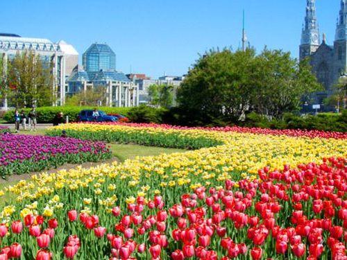 オランダがカナダに毎年チューリップを贈りつづける理由00