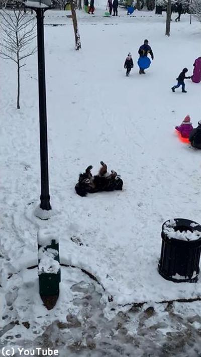 雪を愛してやまないワンちゃん02