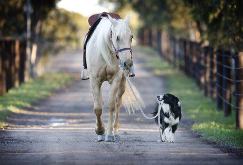 馬に騎乗する犬11