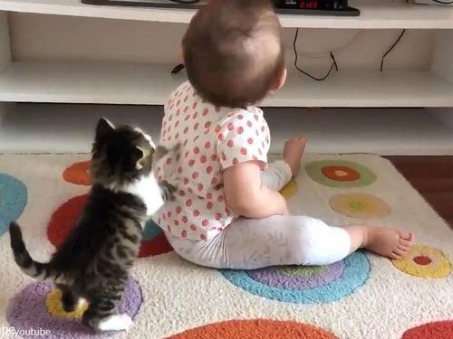子猫が赤ちゃんに挑む04