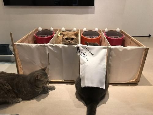 他の猫のエサを食べるデブ猫対策08