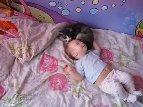 赤ちゃんをあやす猫02