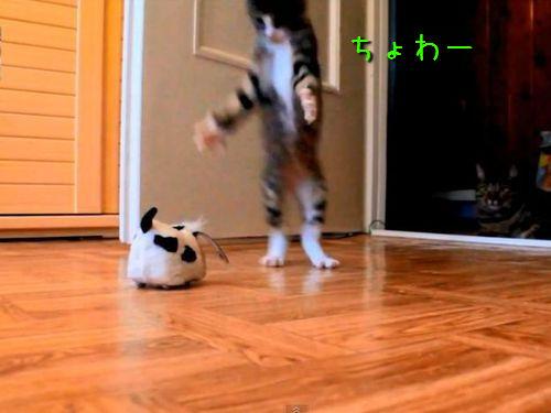 ハイテンションな子猫