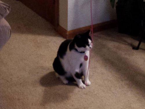 風船を手放したくなかった猫02