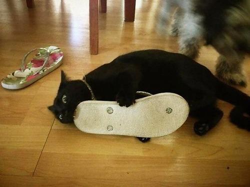 猫に襲われる人々03