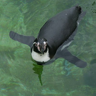 ペンギン07