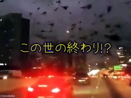 テキサス州の鳥は「この世の終わり」00