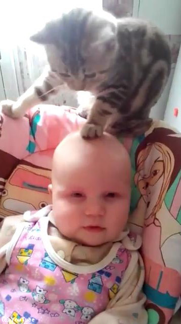 猫と赤ちゃん01