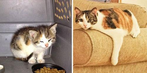 救助された猫13