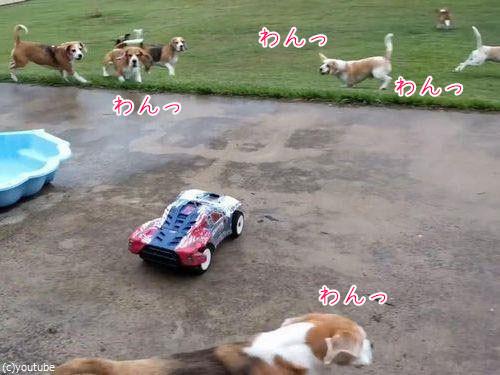 犬とラジコンカーと広い庭00
