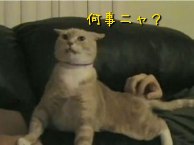 びっくりする猫