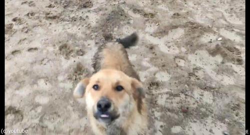 沼地にハマって動けない犬を救出07