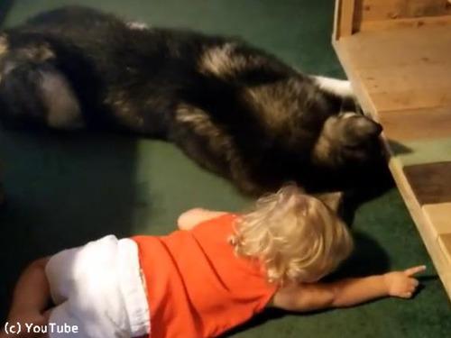 妹のためにボールを取ってあげようとする犬00