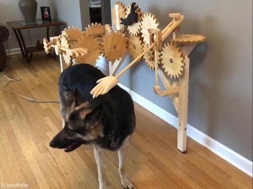 犬を自動でナデナデするマシーン03