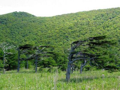 凄い木15