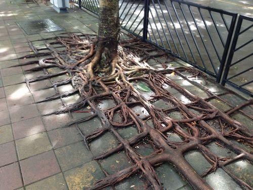 木の生命力00